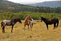 Horseback-Riding-in-Whitefish-Montana