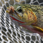 Trout-Fishing-near-Whitefish-Montana